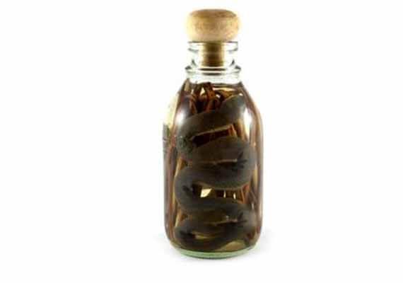 snake bottle